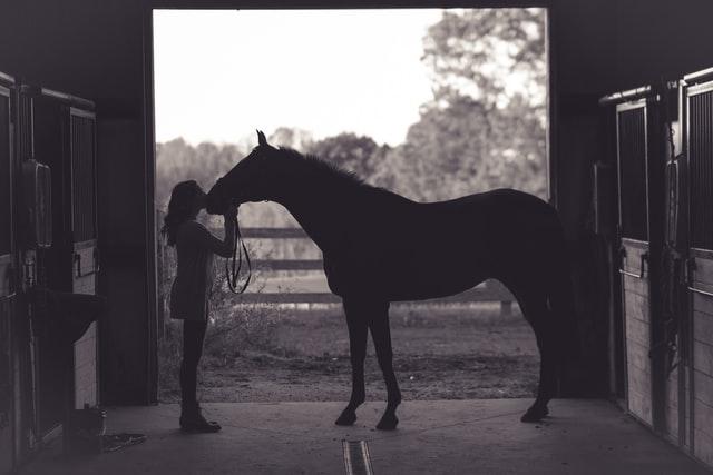 licol de cheval